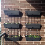 Balcony Gardening Update – The Wall Planter