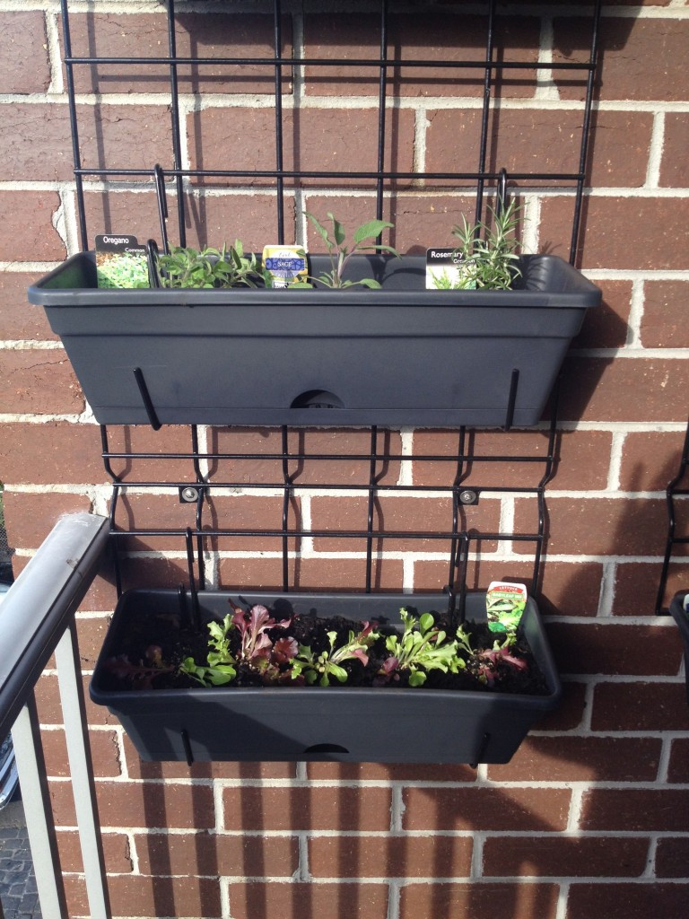 Balcony Gardening Update The Wall Planter