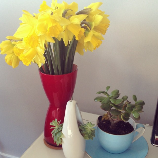 Little corner of plant life in my lounge room. Love how bright the daffodils are! #myhome #flowers #succulents