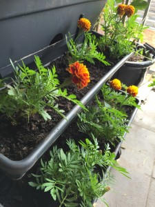 January Balcony Gardening Update