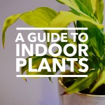 A Guide to Indoor Plants