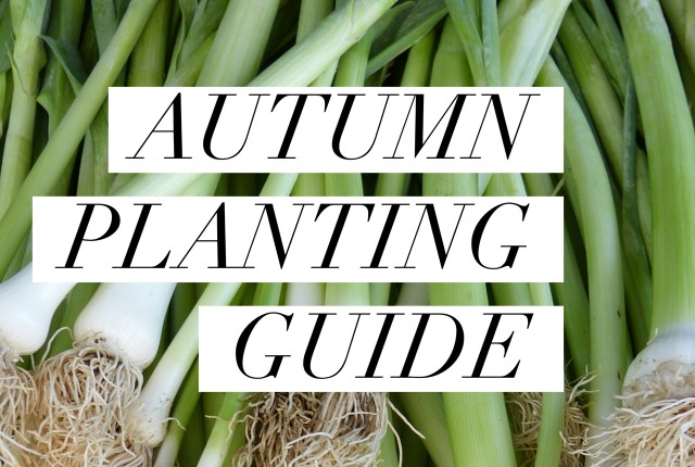Autumn Planting Guide