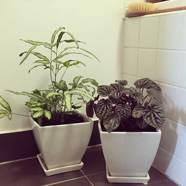 Pretty happy about my new little plants for in my bathroom. Love adding greenery where I can, plus they're so good for keeping the air clean! #indoorplants #myhome #lowtoxliving