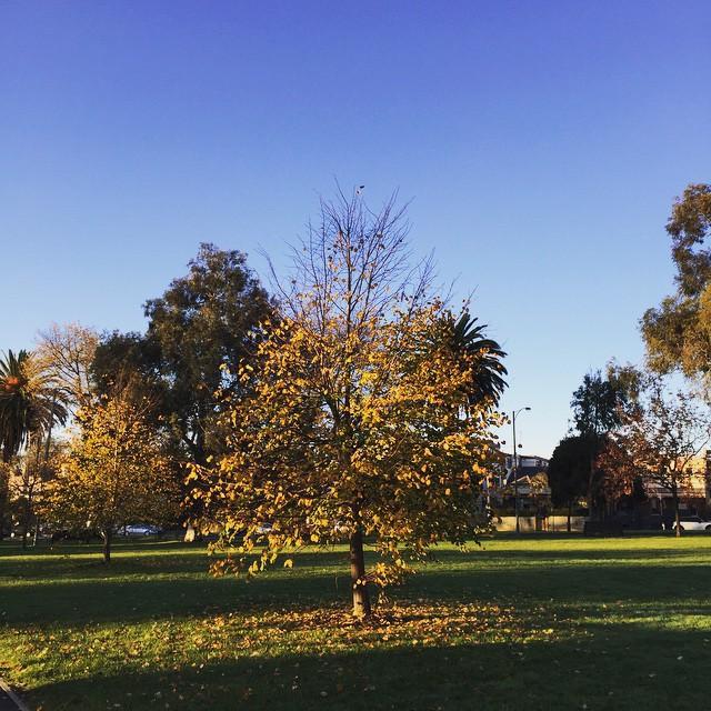 Gorgeous morning in Melbourne, nice way to start the week! #melbourne #autumn #blueskies #monday