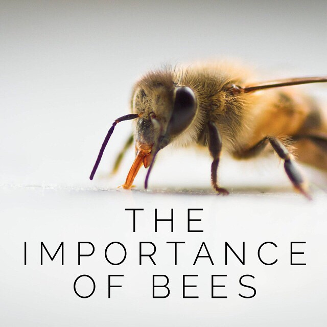 Today on I Spy Plum Pie I'm talking all about the importance of bees to our food system & how we can all help them #bees #ecoliving #foodsecurity #honeybee