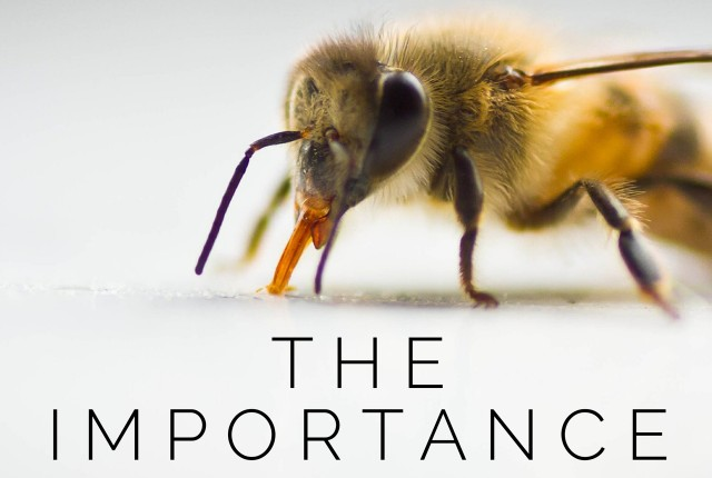 The Importance of Bees