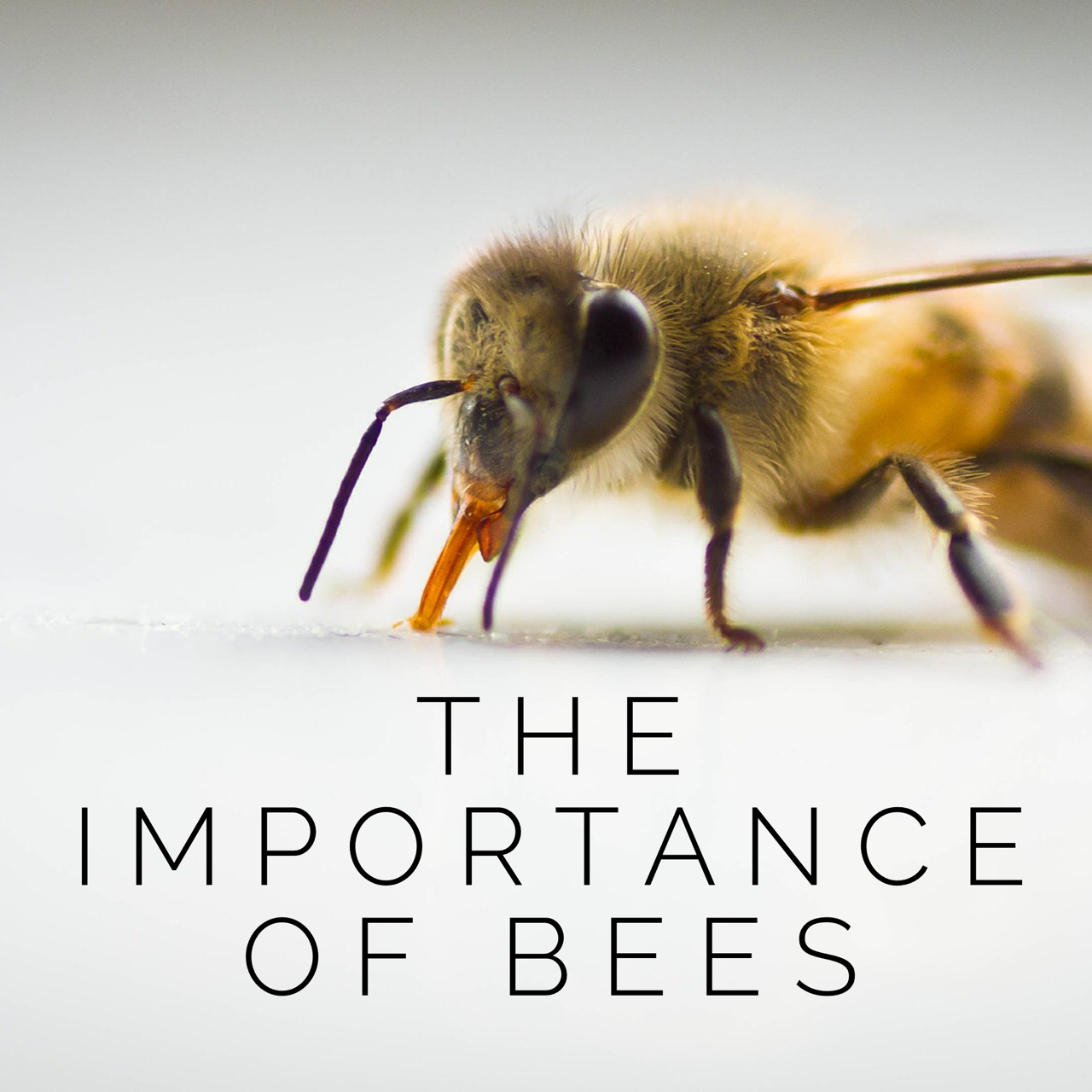 importance of honey bees for sustaining life on earth
