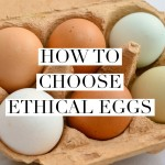 How To Choose Ethical Eggs
