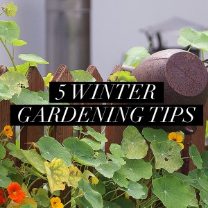 5 Winter Gardening Tips | I Spy Plum Pie