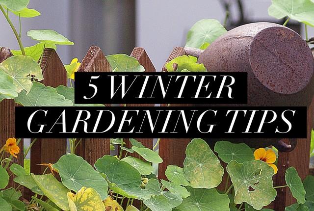 5 Winter Gardening Tips   I Spy Plum Pie