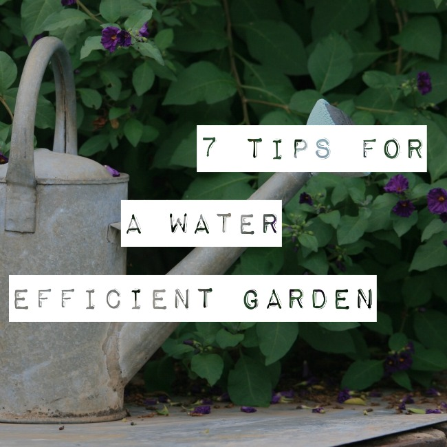 7 Tips for a Water Efficient Garden