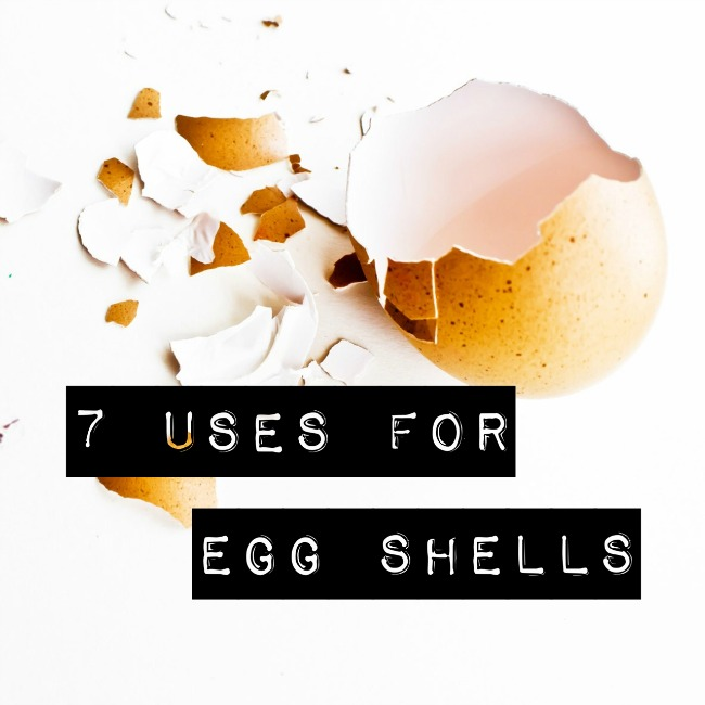 7 Uses for Egg Shells | I Spy Plum Pie