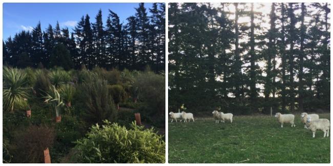 Weekend Adventures: Christchurch