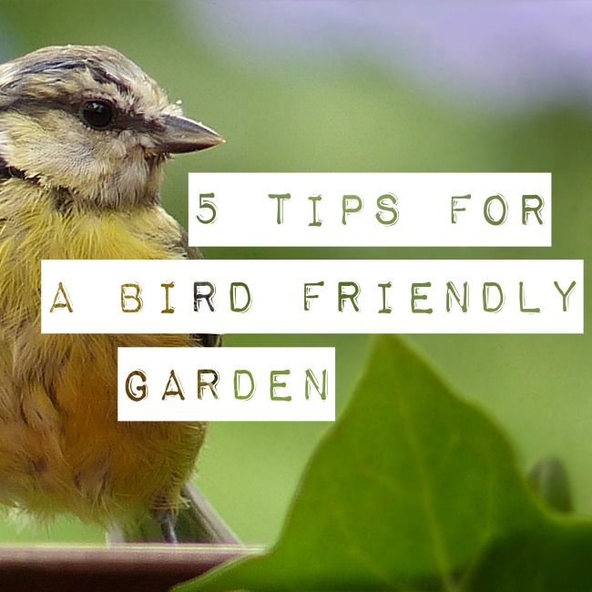 5 Tips for a bird friendly garden