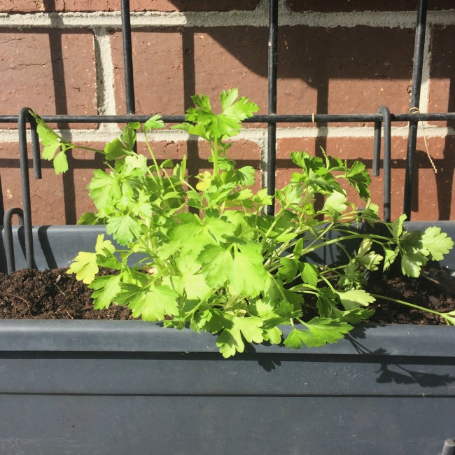 Autumn Balcony Garden Update 2017 | I Spy Plum Pie