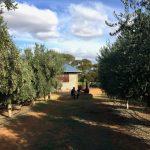A Day at Cobram Estate
