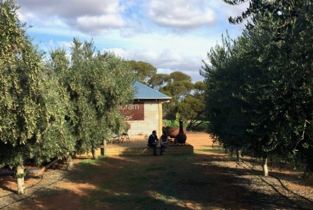 A Day At Cobram Estate | I Spy Plum Pie
