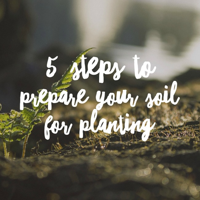 5 Steps to Prepare Your Soil for Planting | I Spy Plum Pie