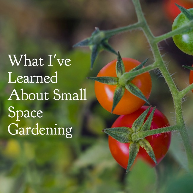 What I've Learned About Small Space Gardening | I Spy Plum Pie