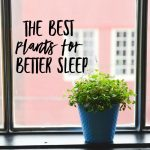 The Best Plants for Better Sleep