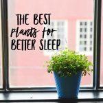 The Best Plants for Better Sleep