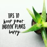 Tips To Keep Your Indoor Plants Happy