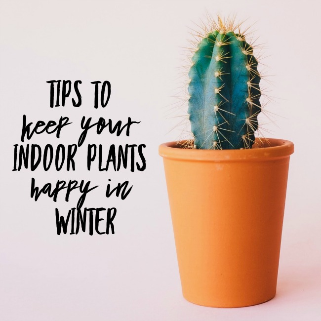 Tips to Keep Your Indoor Plants Happy in Winter | I Spy Plum Pie