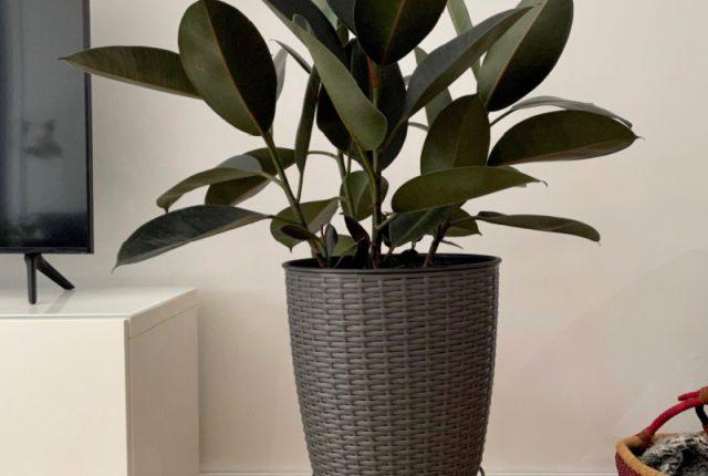 Tips for Watering Indoor Plants | I Spy Plum Pie