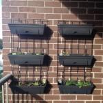 Balcony Gardening Update – The Wall Planter