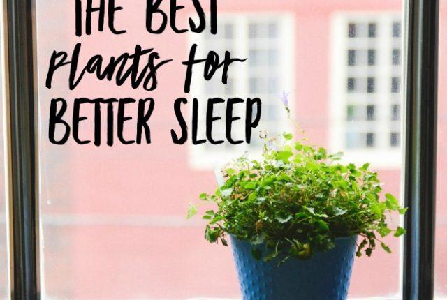 Best plants for better sleep | I Spy Plum Pie