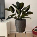 Tips for Watering Indoor Plants